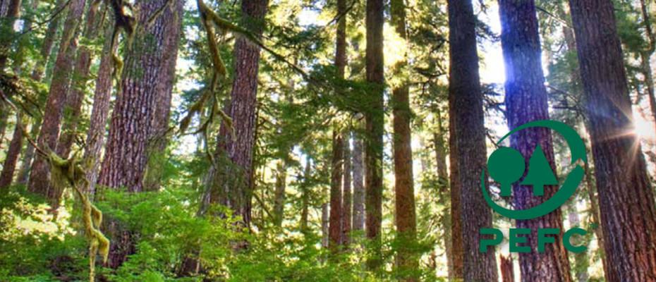 PEFC: gestion durable de la forêt